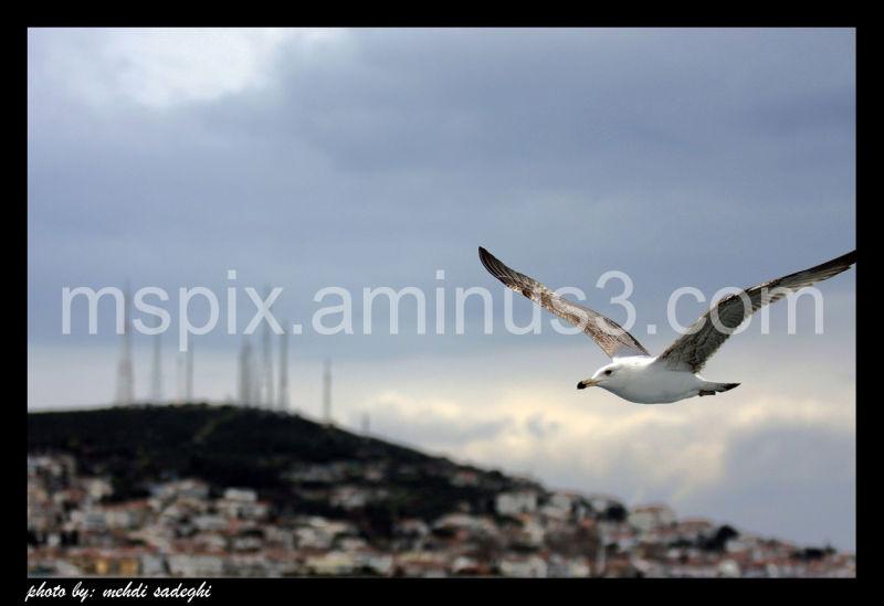 The seagulls of marmara sea