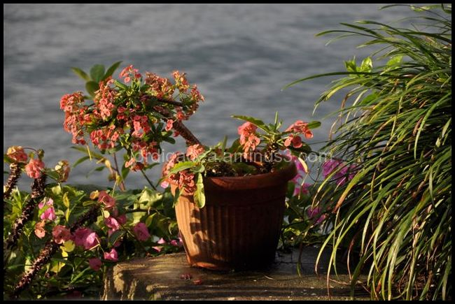 Flowerpot, Sumatra, lake Toba, Indonesia