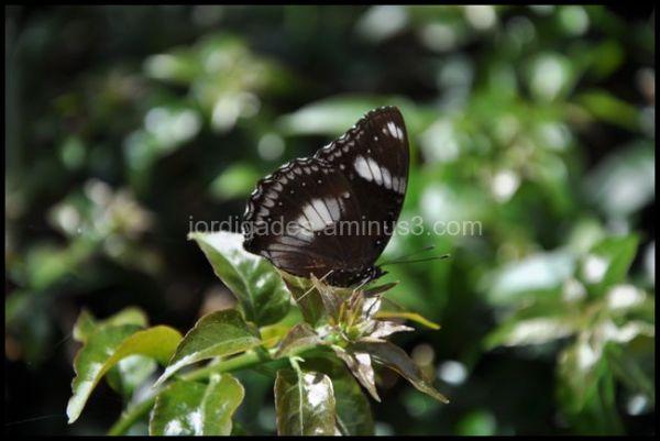 butterfly,sumatra,indonesia