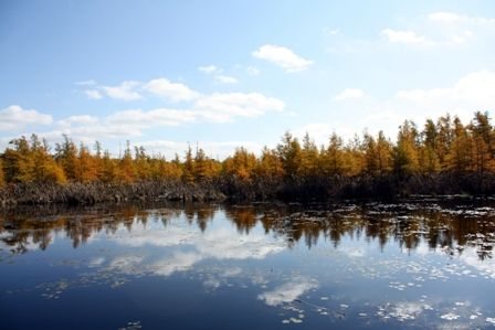 Fall surrounds this beautiful bog