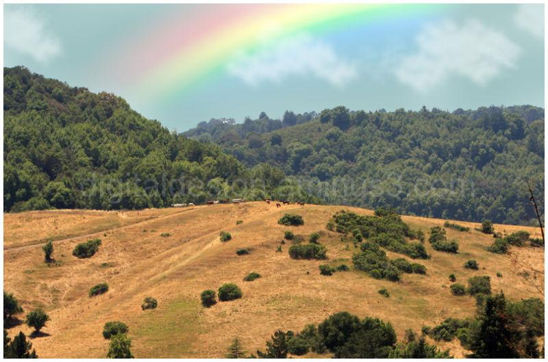 Backview: Rainbow