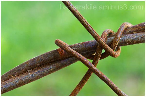 Macro shot of some rusty barbwire