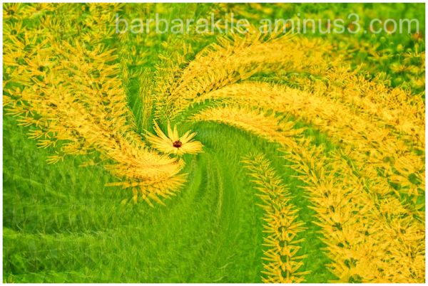 Rotating multiple exposure of flower while zooming