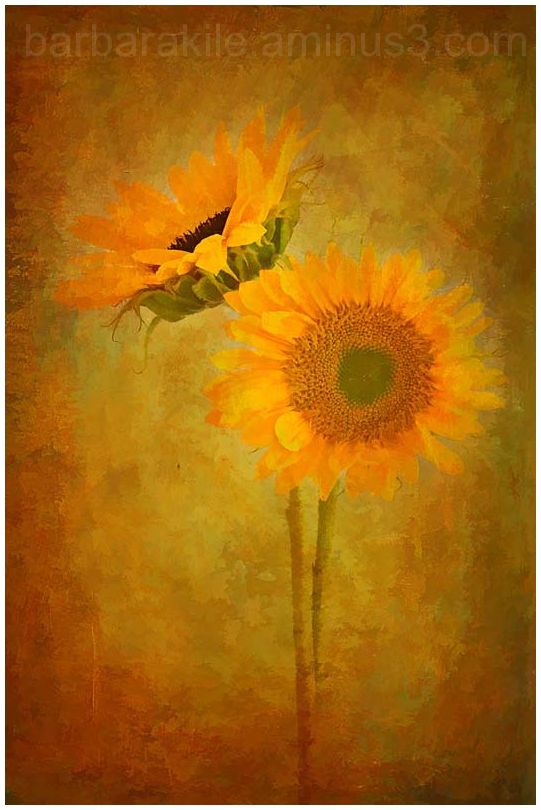 Watercolor rendition of sunflowers and texture