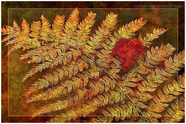 Texture overlay of wood fern