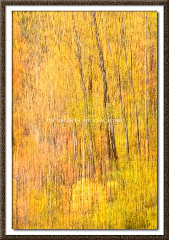 Camera pan of fall foliage