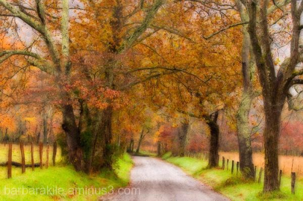 Impressionistic scene of Sparks Lane, Smoky Mts