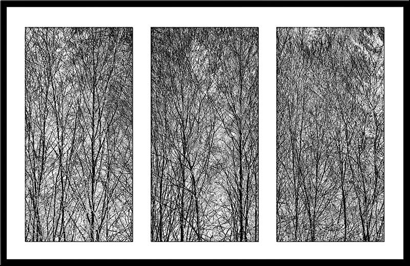 Triptych of tree patterns