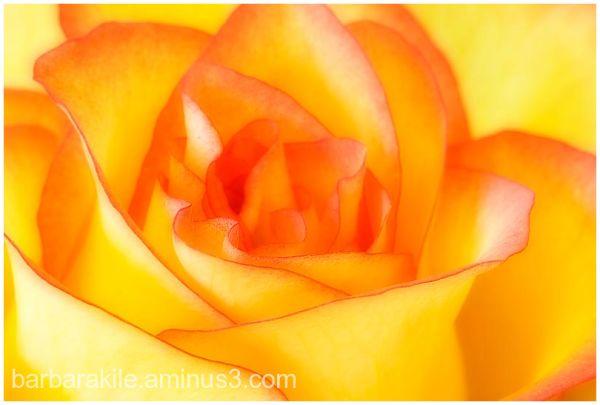 Soft focus overlay on flower