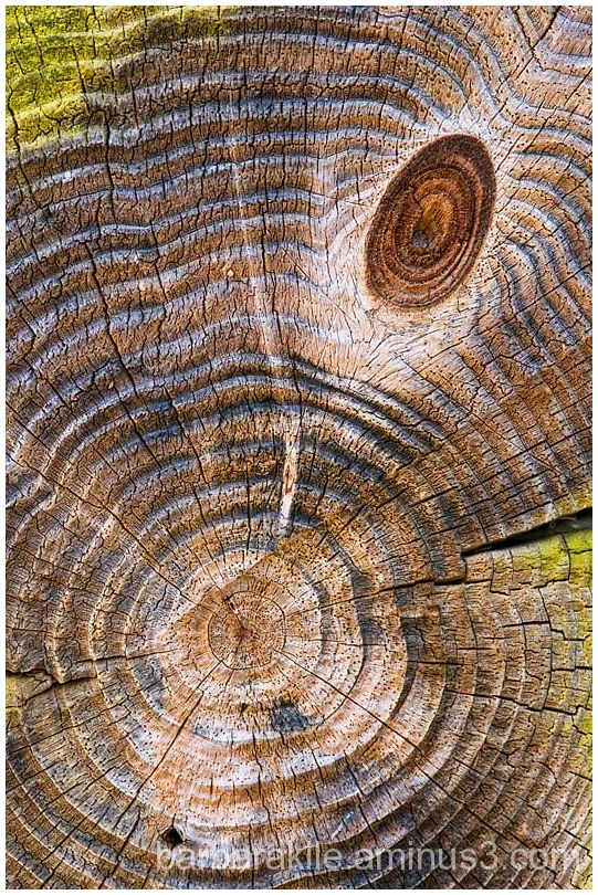 Cross section of tree with patterns