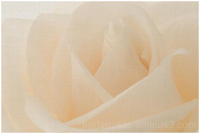 Linen texture overlay of rose