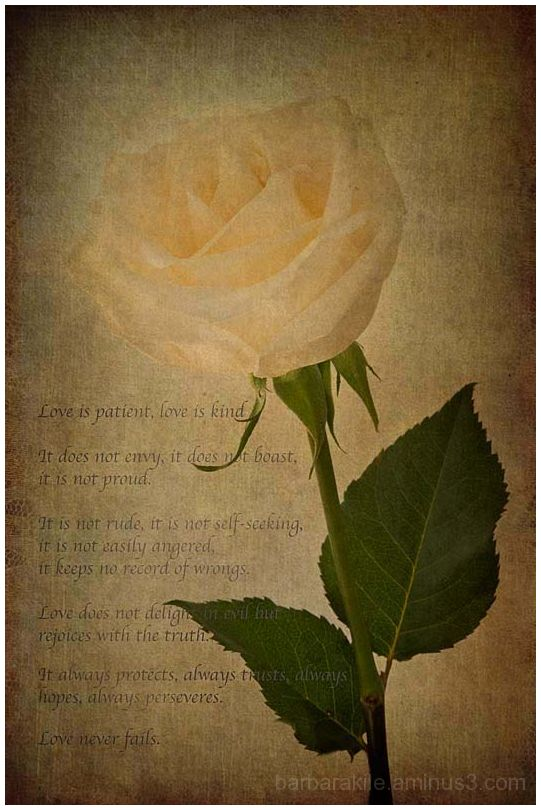 texture overlay of rose with love scripture