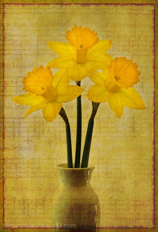 Texture overlay of daffodil