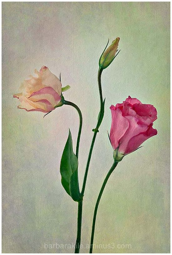 floral with texture overlay