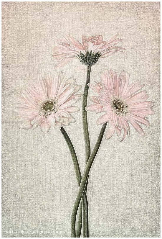 sketch of daisies