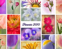 Collage of flower images