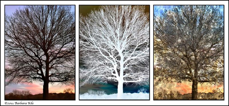 iPhone Triptych of tree