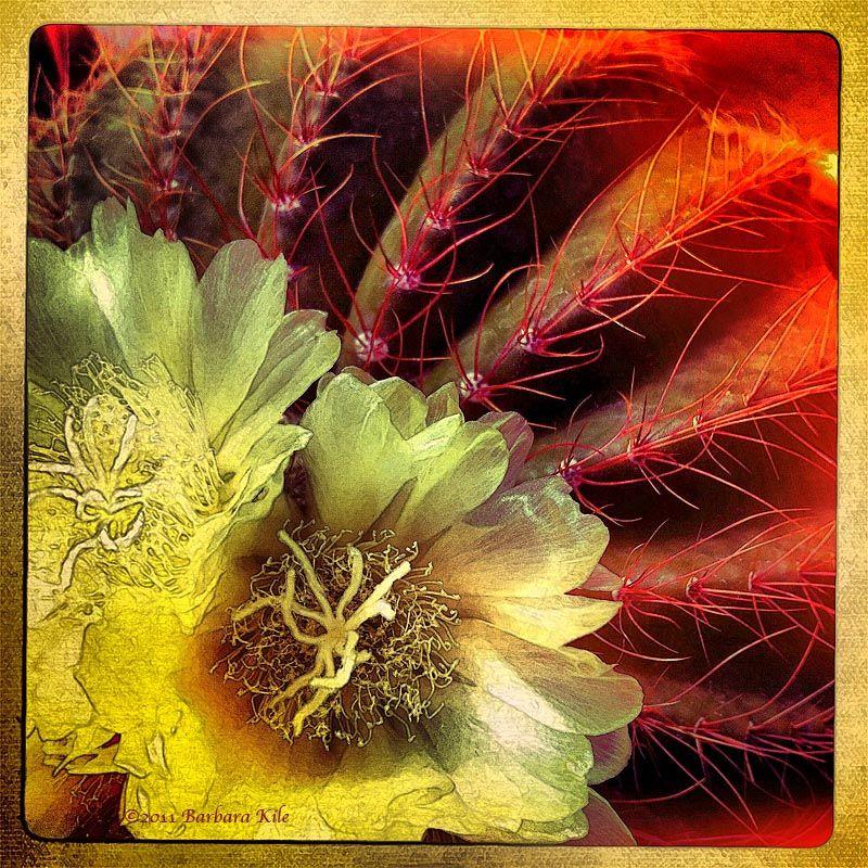 iPhone succulent