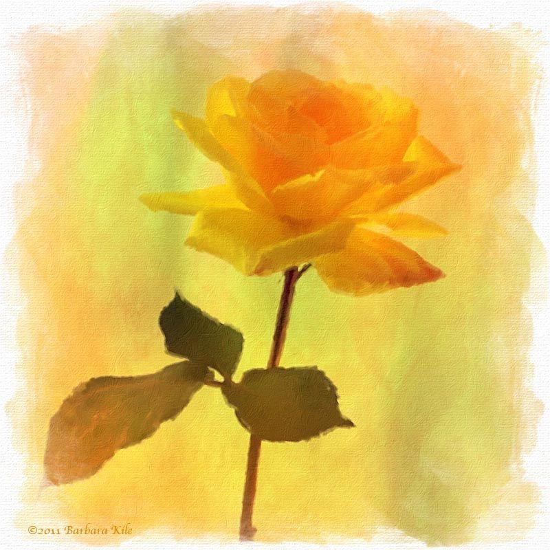 iPhone capture of rose