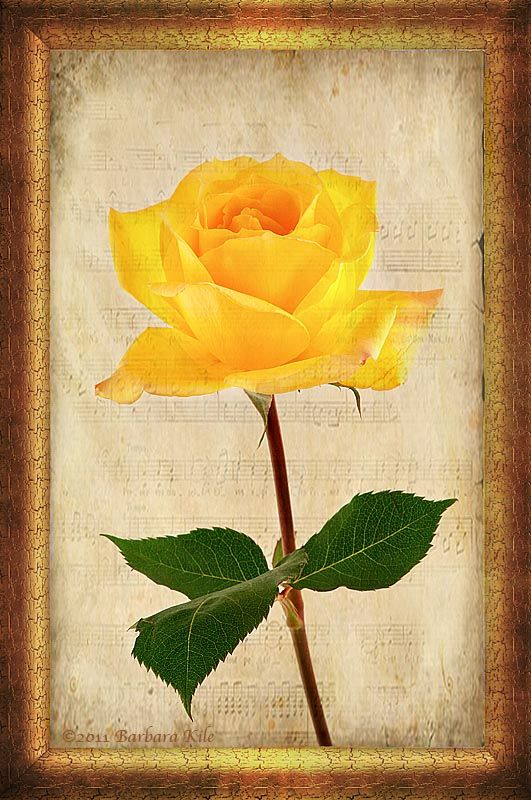 texture overlay of yellow rose