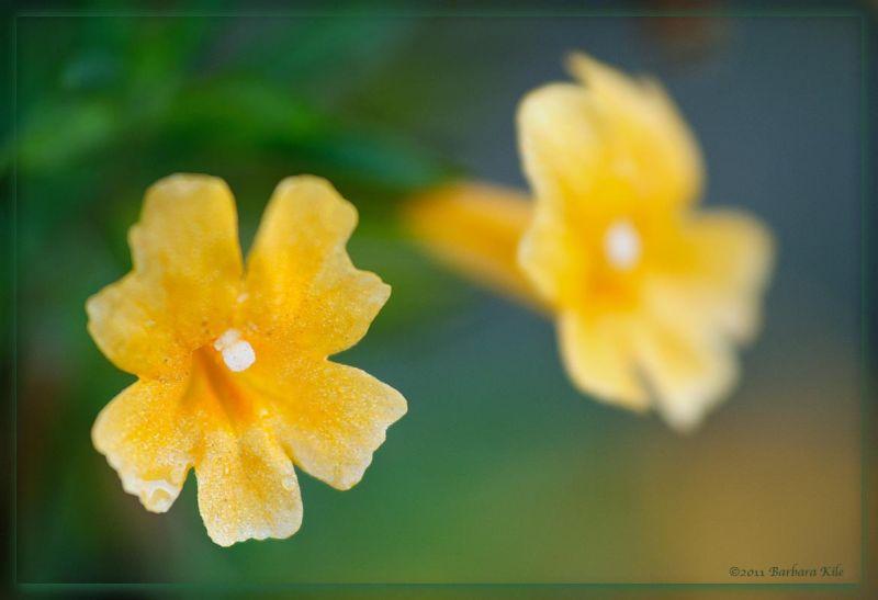 Wildflowers in Big Sur