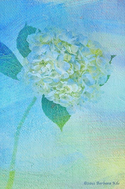 Hydrangea and texture