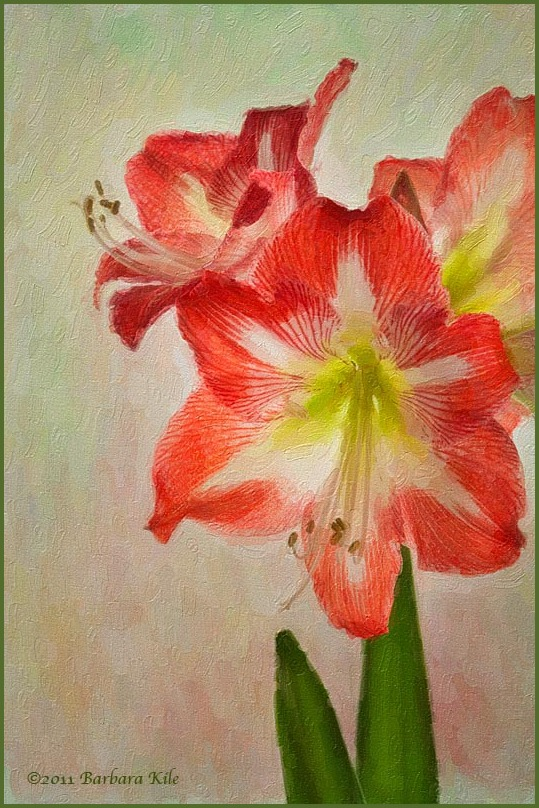 Amaryllis painting
