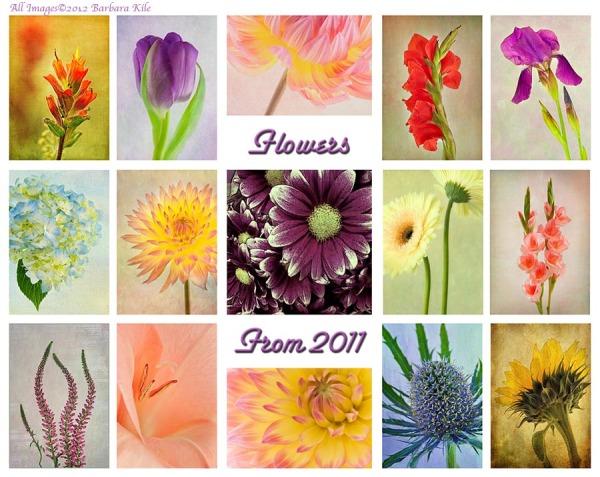 2011 in Flowers