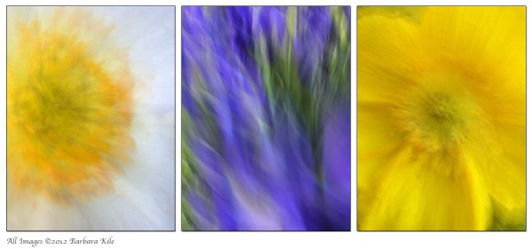 Collage of flower pans and camera movement, iPhone