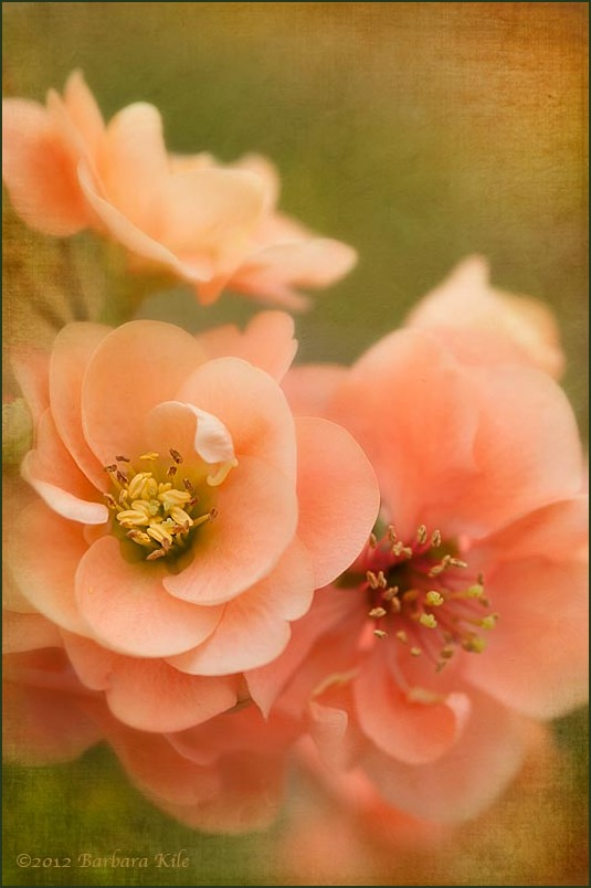 Texture Overlay of spring flowers