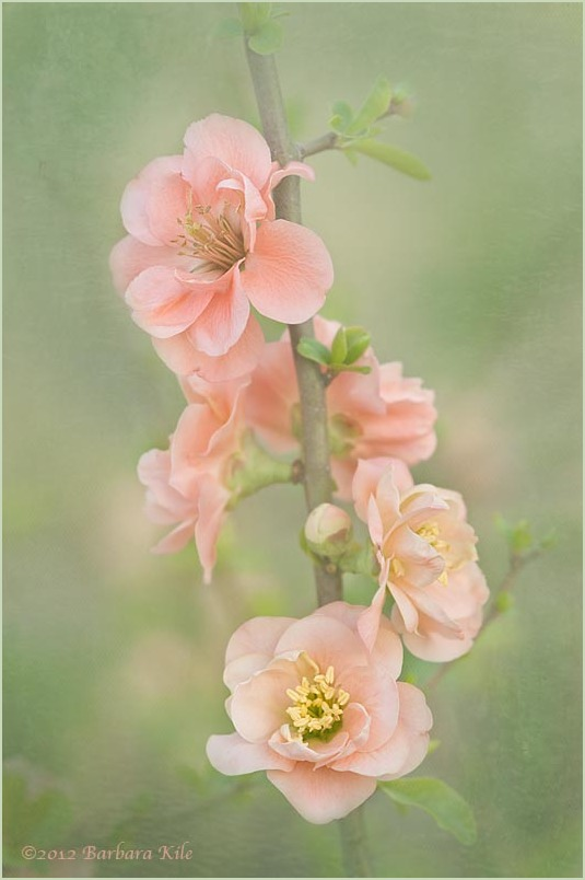 soft texture overlay of spring flowers