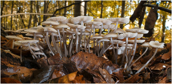 A group of mushrooms.