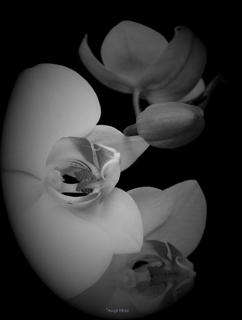 Enigmatique orchidée