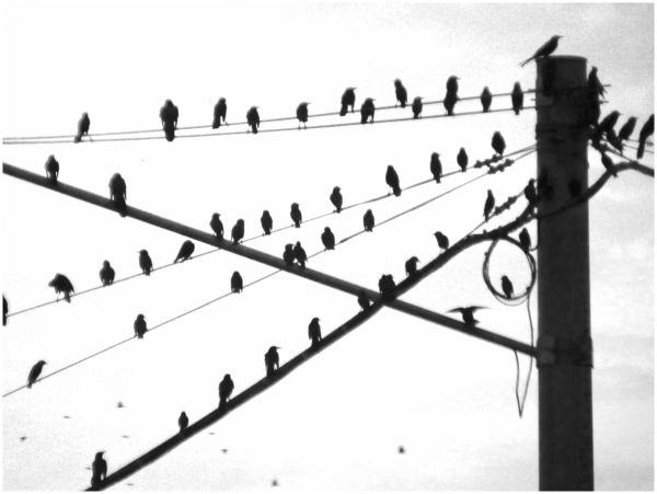 Birds on a Wire - 1/2