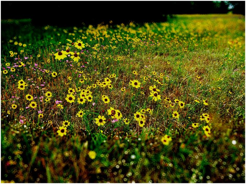 Flowers of Summer - 3/14