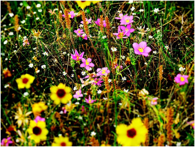 Flowers of Summer - 4/14