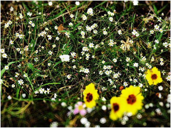 Flowers of Summer - 5/14