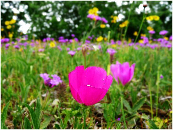 Flowers of Summer - 11/14