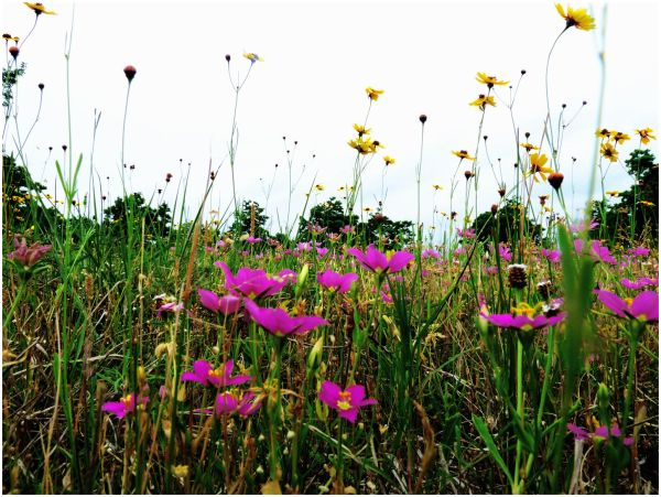 Flowers of Summer - 14/14