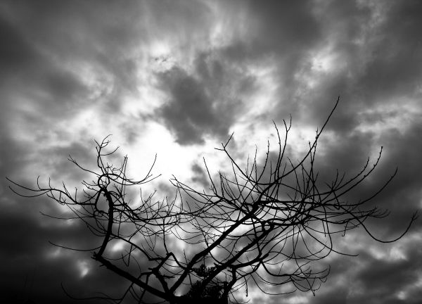 Nubes y árbol