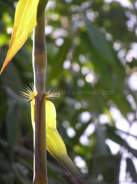 bamboo lashes