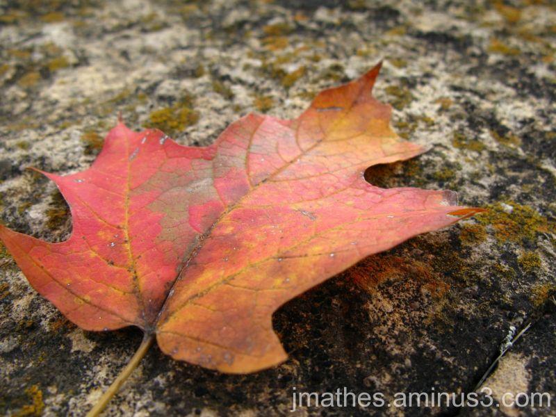 Fall Begins
