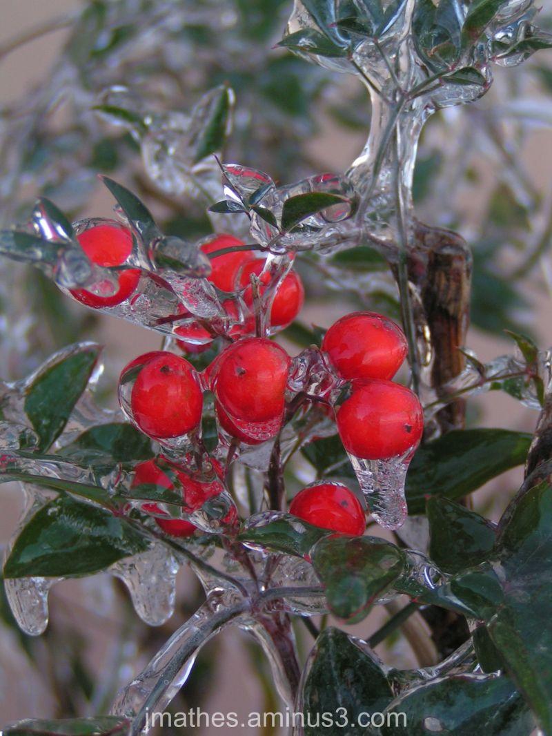 Icy berries
