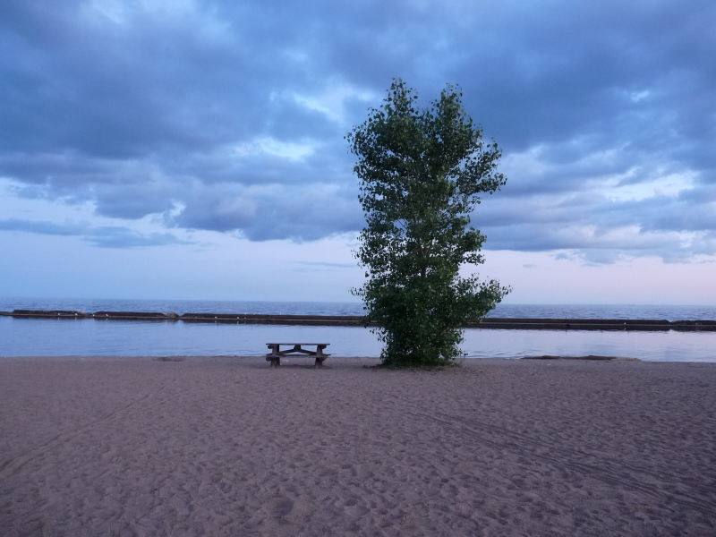 Oasis on a Beach