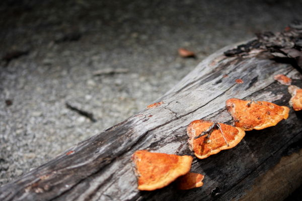 Mushroom...Mushrooms...Mushhhroooommmmm