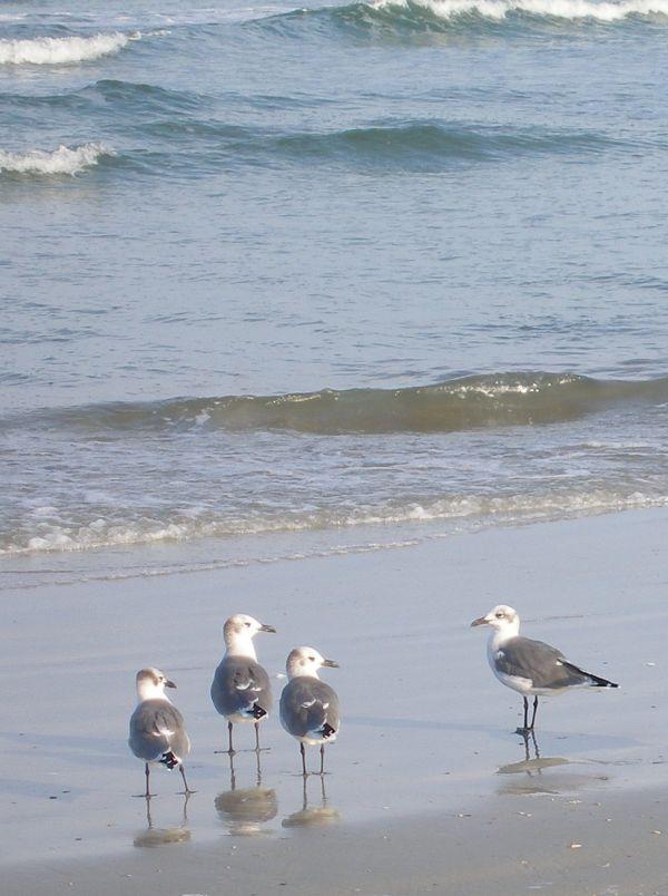 four gulls on Florida Beach