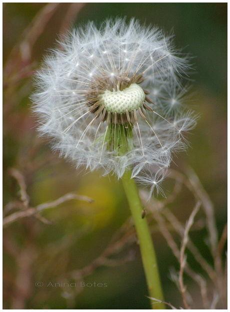 Plants, weeds, garden