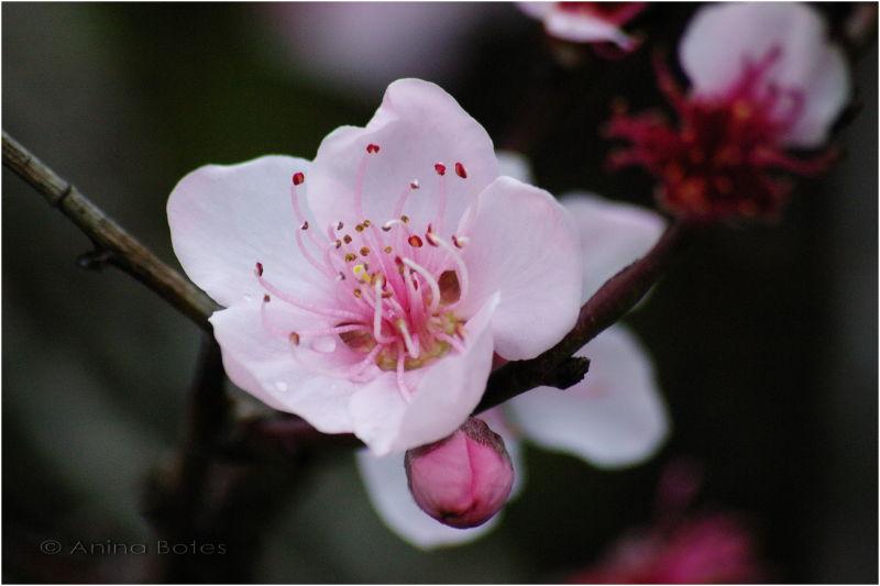Pink, flower
