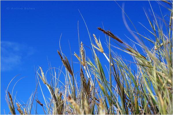 Blue, sky, grass