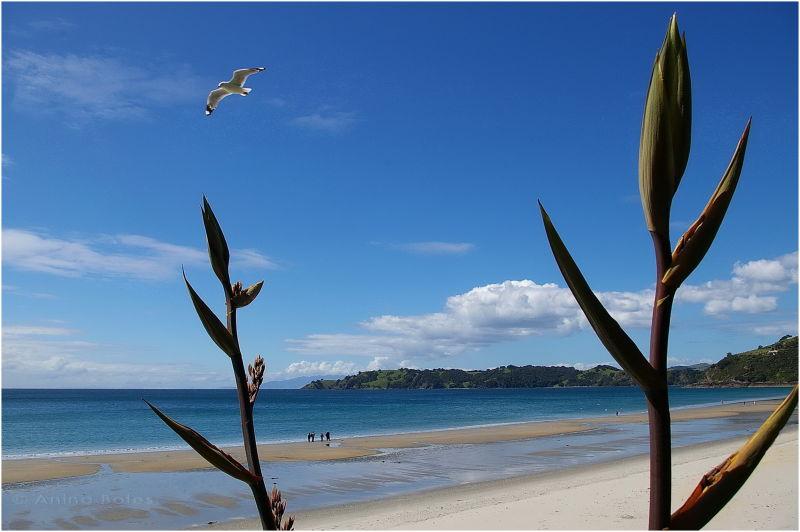 Flax, Waiheke Island, Beach